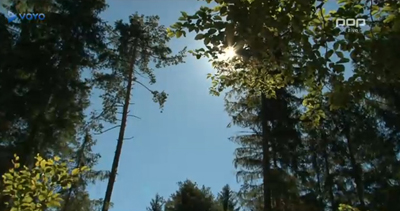 čarobni gozd